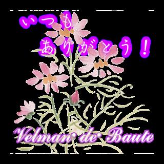 和風デコメ 秋桜