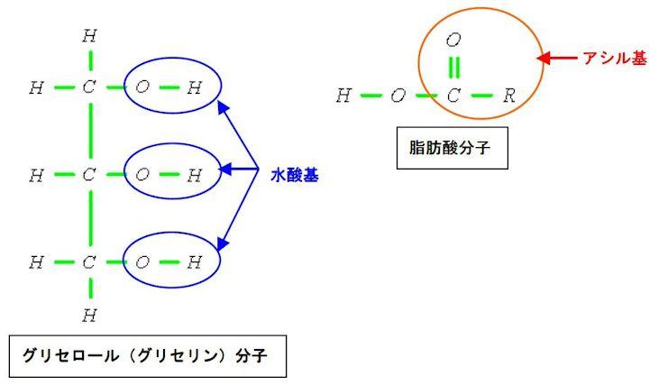 脂グリセロール(グリセリン)分子と脂肪酸分子肪の構造