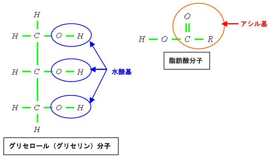 脂グリセロール(グリセリン)分子と脂肪酸分子肪の... ↑クリックで拡大 記号Rはアルキル基のこ
