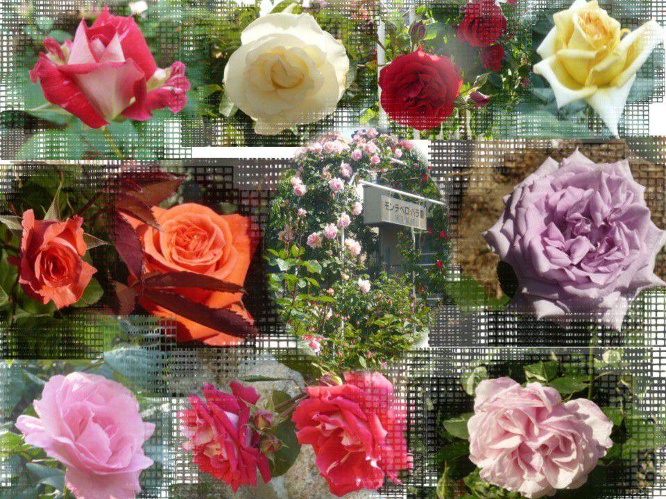 バラ公園 | Ashiya Rose Garden