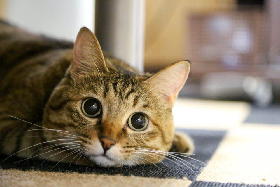 ピーちゃんに似た猫