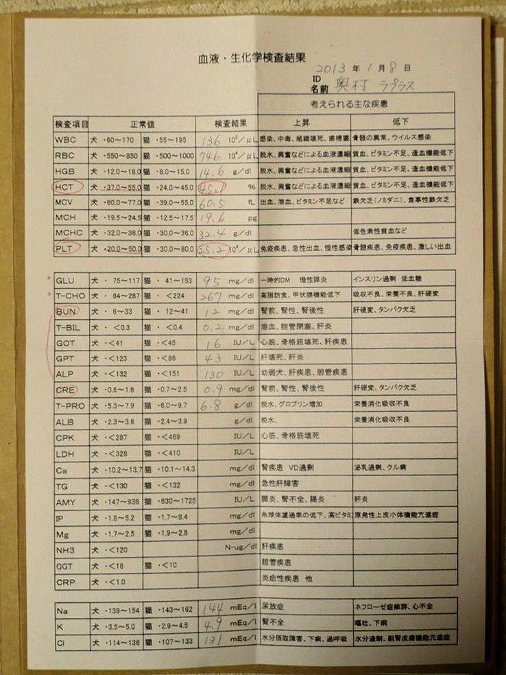 柴犬ラプラス号 去勢前の血液・生化学検査表