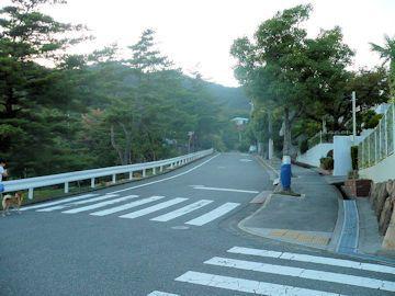 柴犬ラプラス号 ペットホテルからの散歩コースにある剣谷第3公園の紅葉