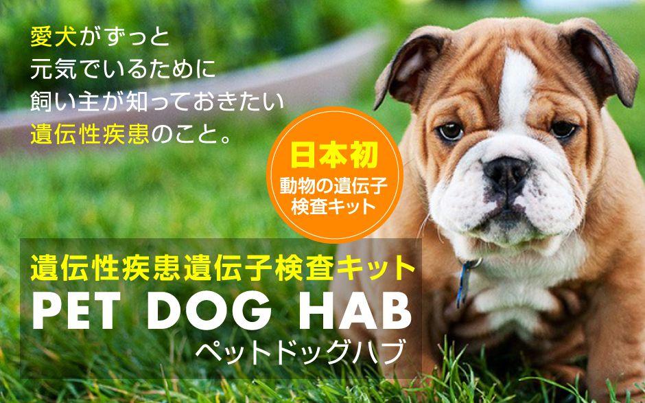 遺伝性疾患遺伝子検査キット「PET DOG HAB」