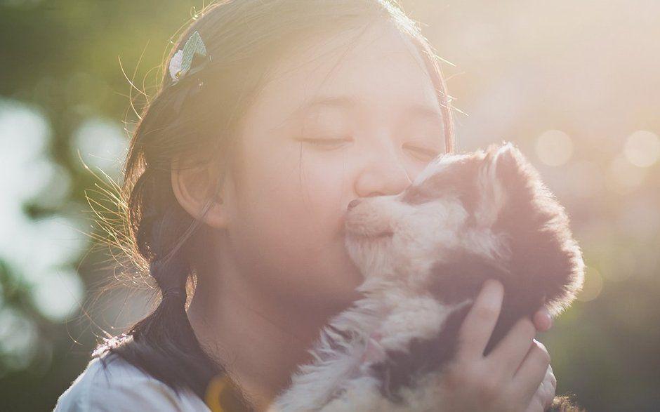 犬・猫のDNA、遺伝性疾患検査|株式会社VEQTA(ベクタ)