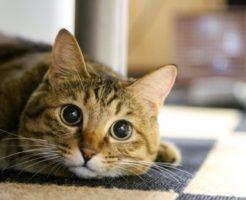 おやつの入った引出しを開けようと奮闘する猫