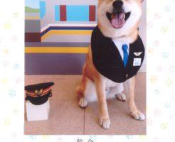 柴犬ラプラス君 フルルで記念写真