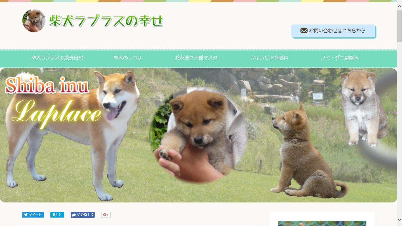 例6:柴犬ラプラスの幸せ(当社運営)