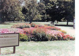 Hagley Park in Christchurch・・・1985/01/31